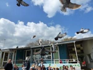 pigeon-1-300x225